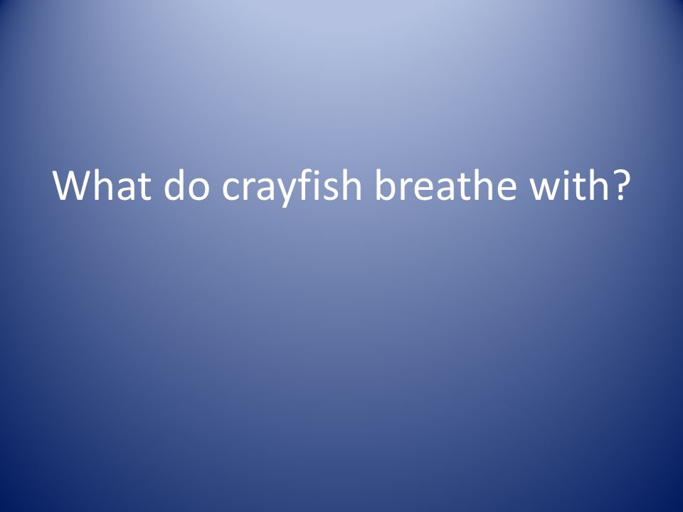 What do crayfish breathe with?