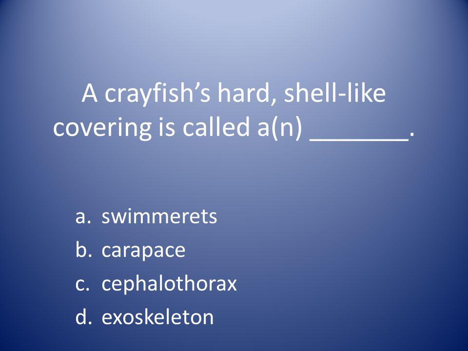 Humans eat crayfish