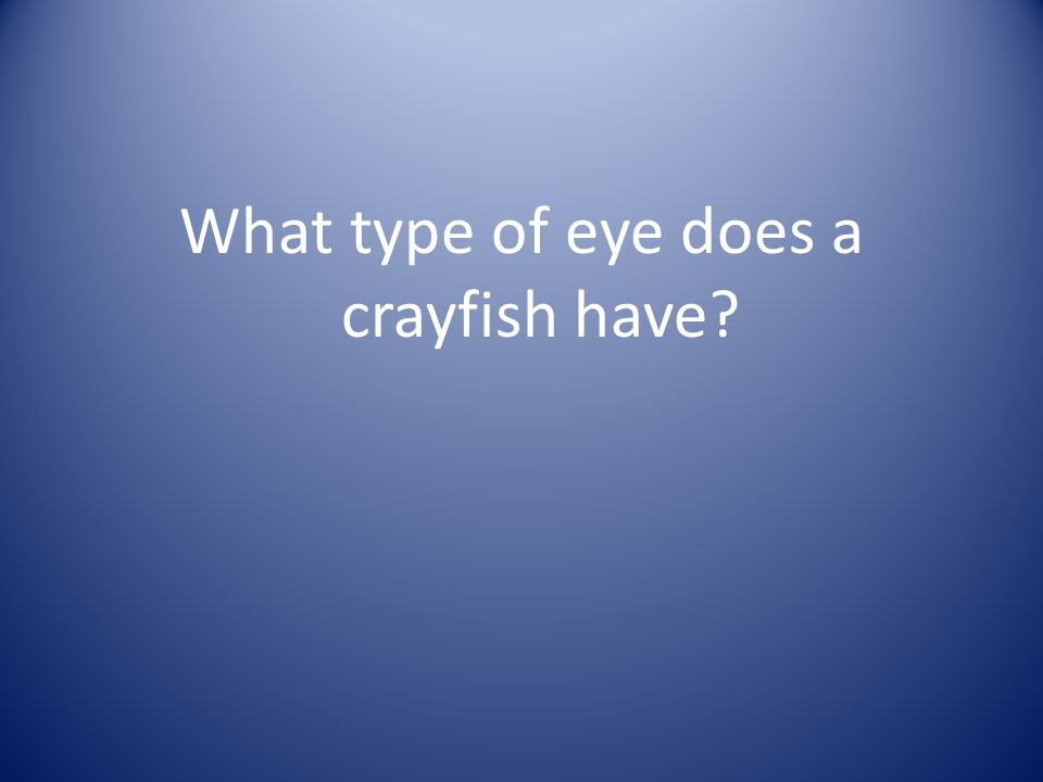 What type of eye does a crayfish have?