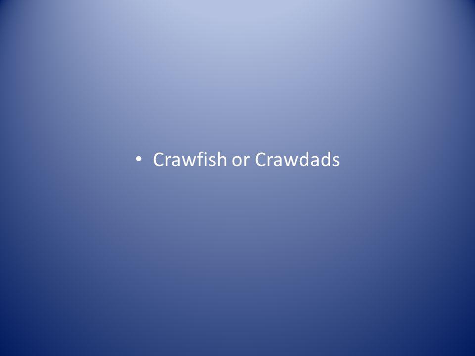 Crawfish or Crawdads
