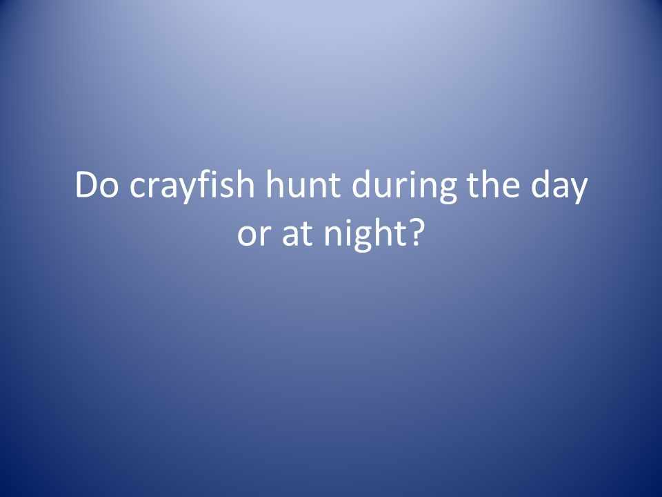 Do crayfish hunt during the day or at night?