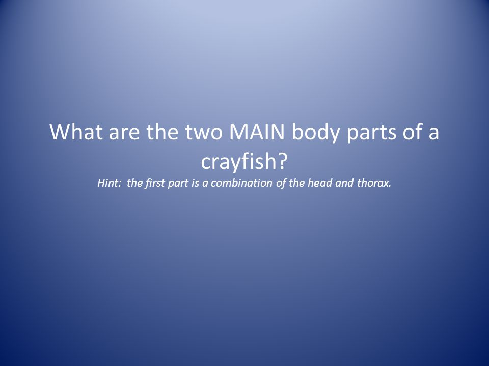 What are the two MAIN body parts of a crayfish? Hint: the first part is a combination of the head and thorax.