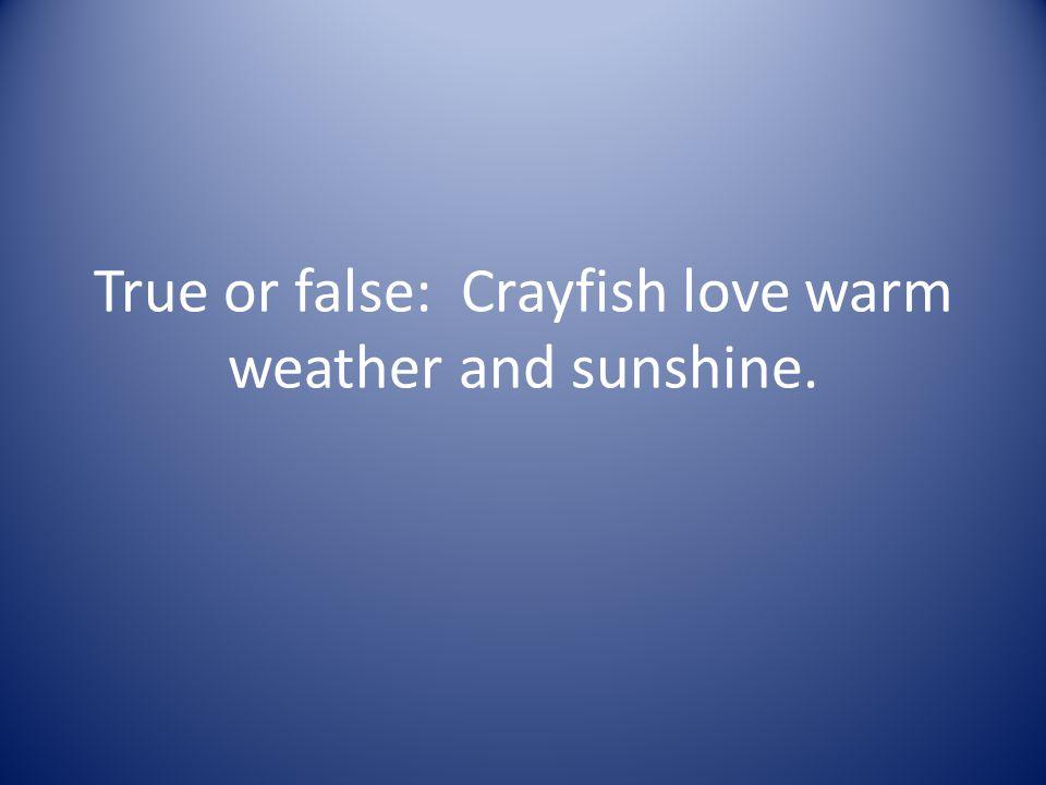 True or false: Crayfish love warm weather and sunshine.