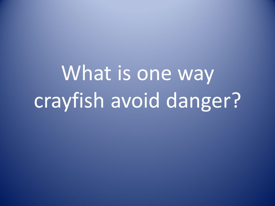 Crayfish avoid danger in the following ways: a.opening and closing claws b.fighting with claws c.waving their claws
