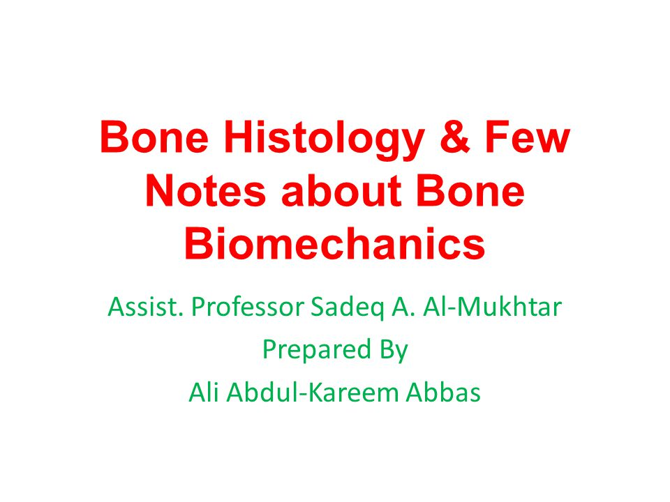 Cancellous Bone (a) Beams of bone, the trabeculae, surround spaces in the bone.