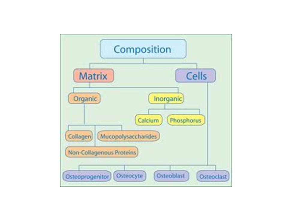 Bone Matrix By weight, mature bone matrix normally is approximately 35% organic and 65% inorganic material.