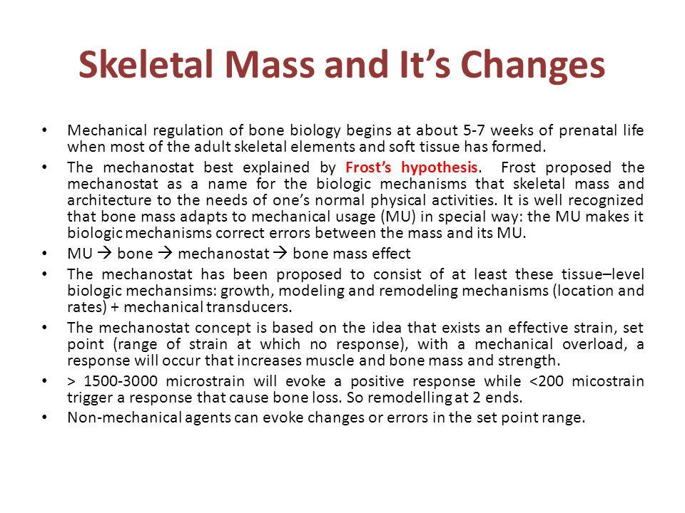 Skeletal Mass and It's Changes Mechanical regulation of bone biology begins at about 5-7 weeks of prenatal life when most of the adult skeletal elemen