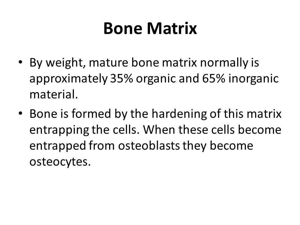 Skeletal Mass and It's Changes Mechanical regulation of bone biology begins at about 5-7 weeks of prenatal life when most of the adult skeletal elements and soft tissue has formed.