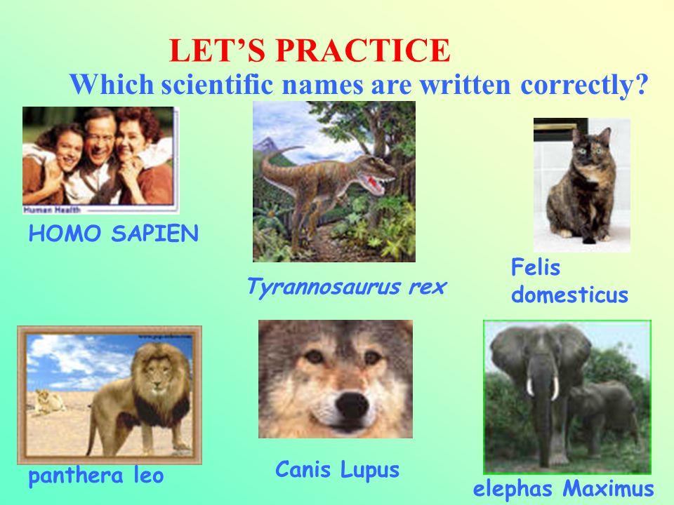 LET'S PRACTICE Which scientific names are written correctly? HOMO SAPIEN Felis domesticus Tyrannosaurus rex panthera leo elephas Maximus Canis Lupus