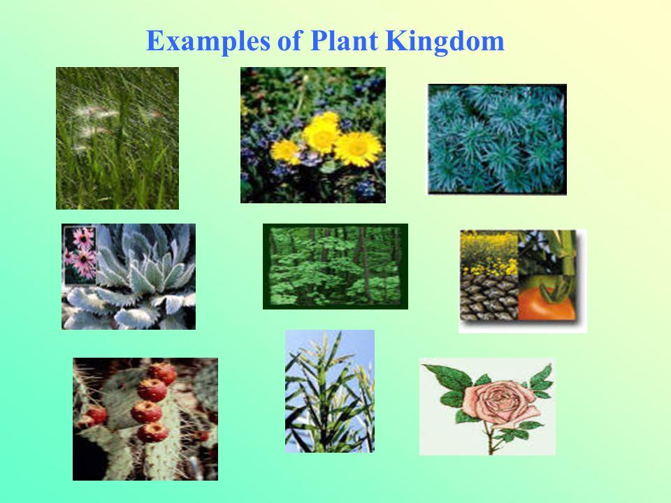 Examples of Plant Kingdom