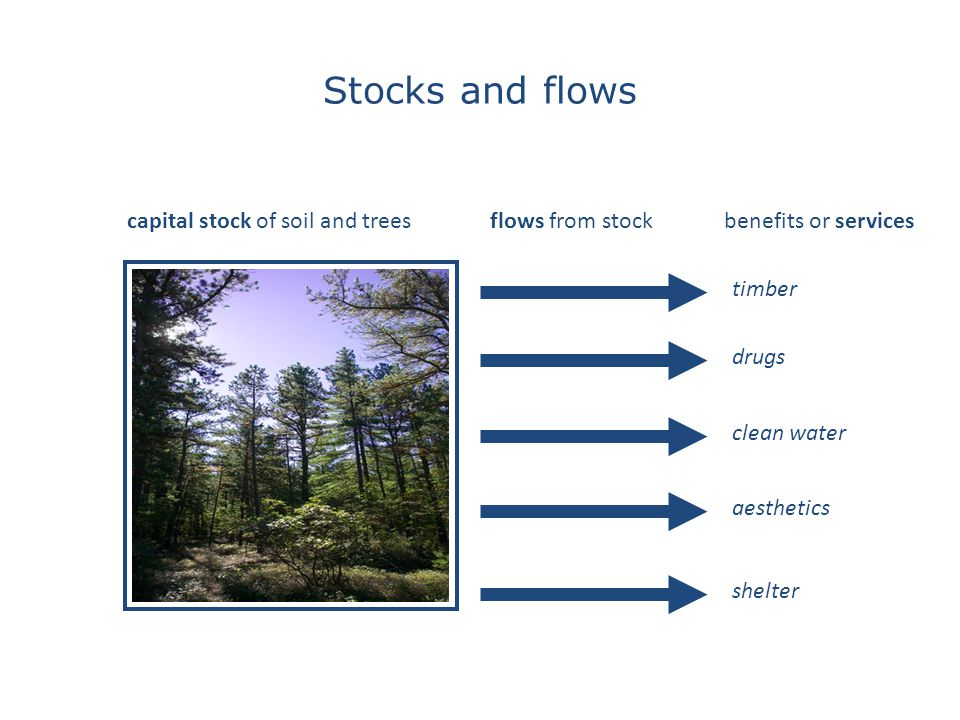 timber drugs clean water aesthetics shelter capital stock of soil and treesflows from stockbenefits or services Stocks and flows