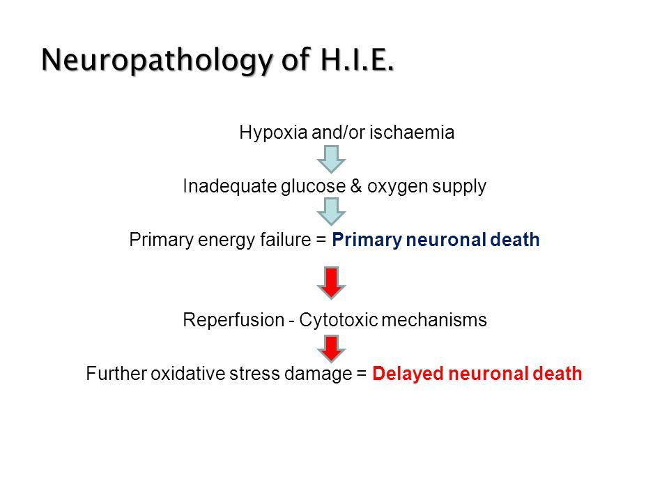 Neuropathology of H.I.E.
