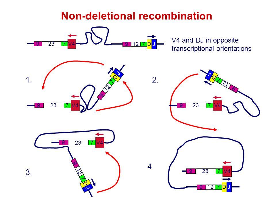 DJ 712 9 V4 723 9 V4 and DJ in opposite transcriptional orientations D J 7 12 9 V4 723 9 1. D J 7 12 9 V4 723 9 3. D J 7 12 9 V4 723 9 2. DJ 712 9 V4