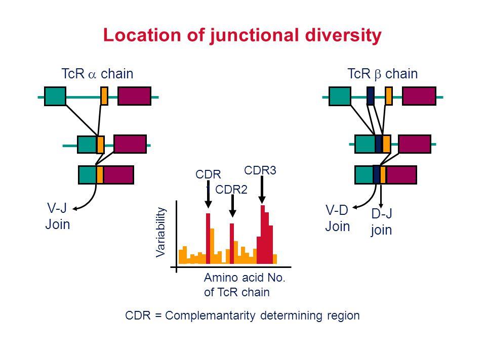 V-D Join D-J join TcR  chain V-J Join TcR  chain Location of junctional diversity Amino acid No. of TcR chain Variability CDR 1 CDR2 CDR3 CDR = Comp