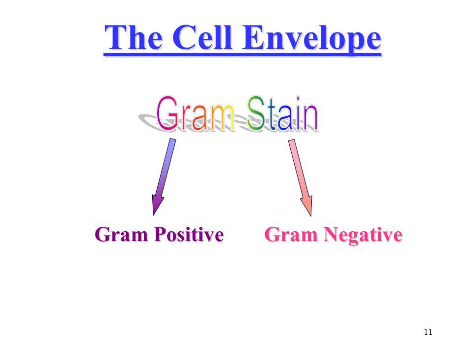 11 The Cell Envelope Gram Positive Gram Negative