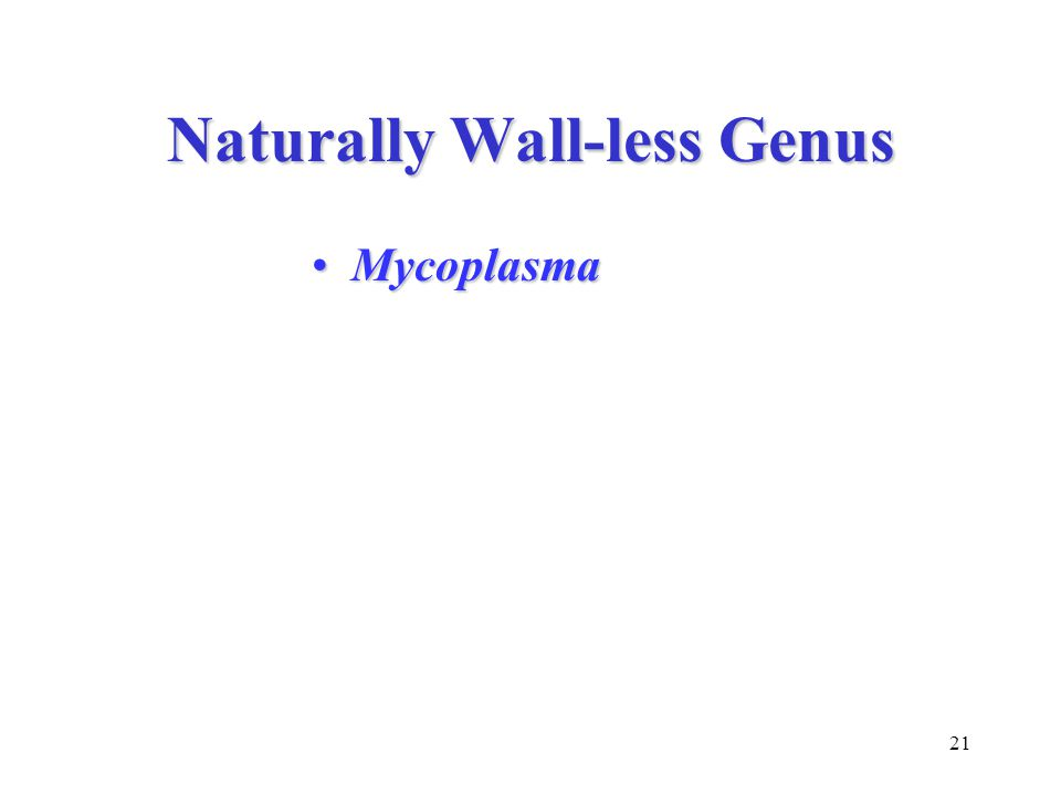 21 Naturally Wall-less Genus MycoplasmaMycoplasma