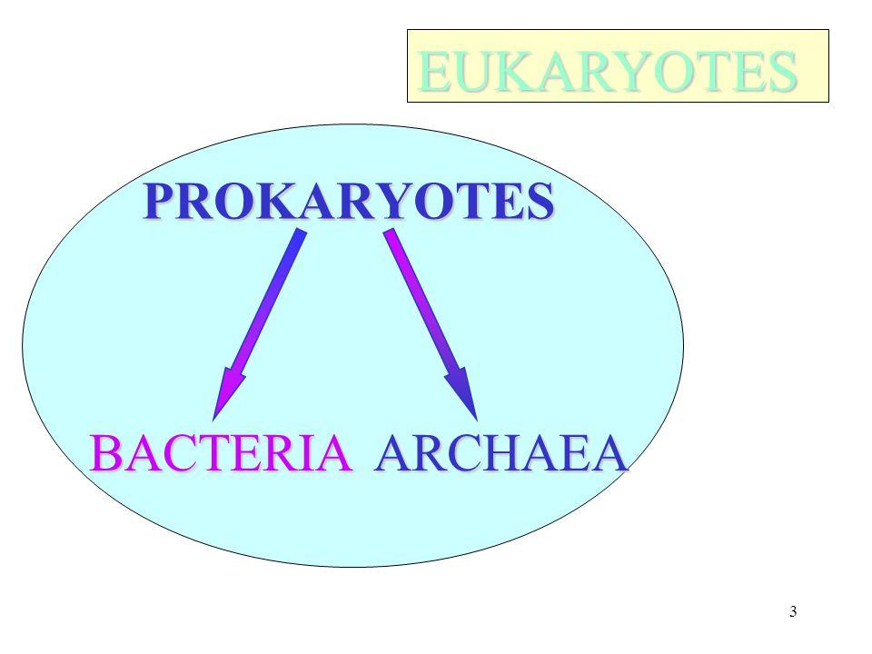3 PROKARYOTES BACTERIAARCHAEA EUKARYOTES EUKARYOTES