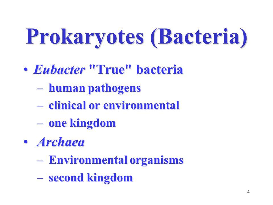 4 Prokaryotes (Bacteria) Eubacter True bacteriaEubacter True bacteria – human pathogens – clinical or environmental – one kingdom Archaea Archaea – Environmental organisms – second kingdom