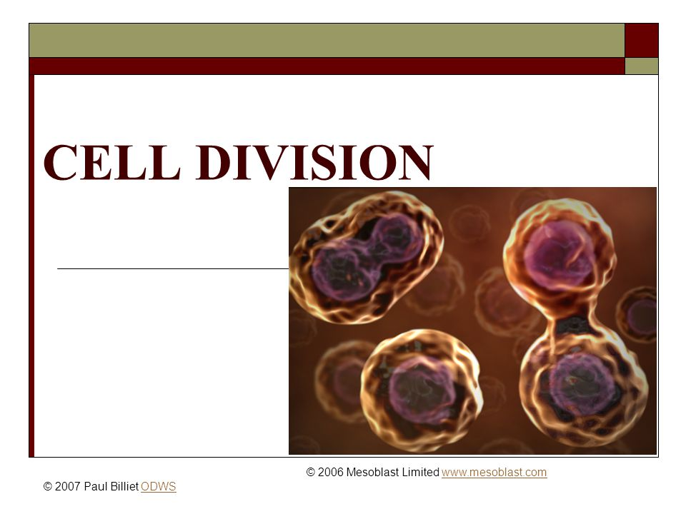 CELL DIVISION © 2006 Mesoblast Limited   © 2007 Paul Billiet ODWSODWS