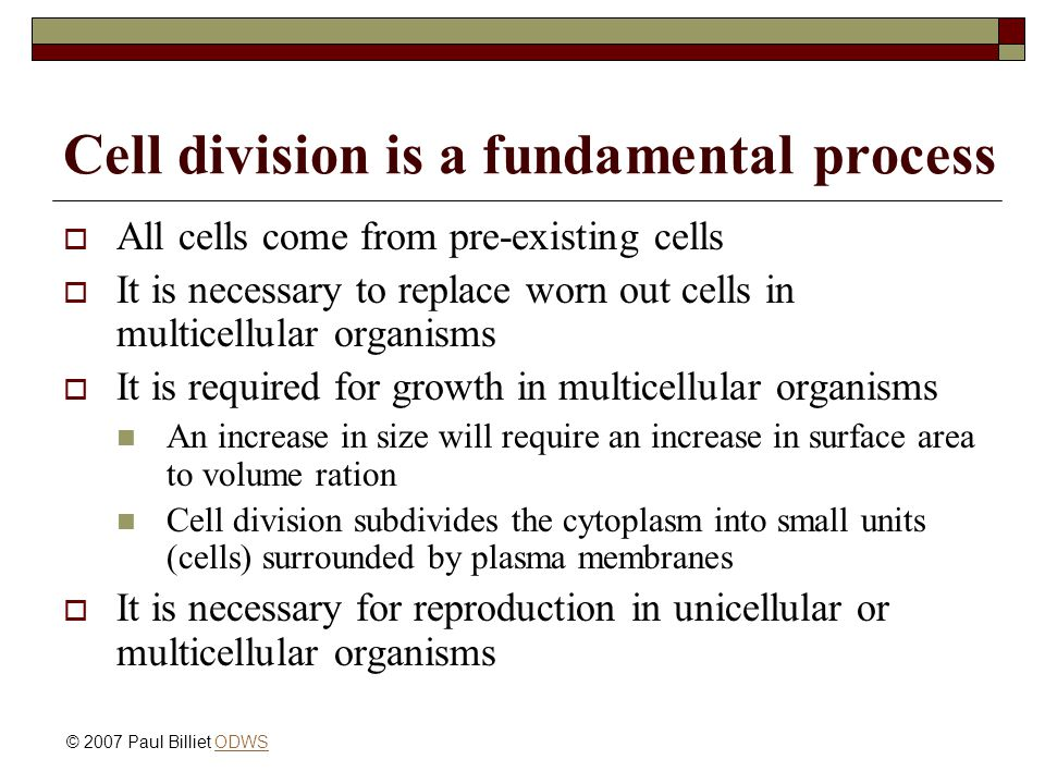 Cell division is a fundamental process  All cells come from pre-existing cells  It is necessary to replace worn out cells in multicellular organisms  It is required for growth in multicellular organisms An increase in size will require an increase in surface area to volume ration Cell division subdivides the cytoplasm into small units (cells) surrounded by plasma membranes  It is necessary for reproduction in unicellular or multicellular organisms © 2007 Paul Billiet ODWSODWS