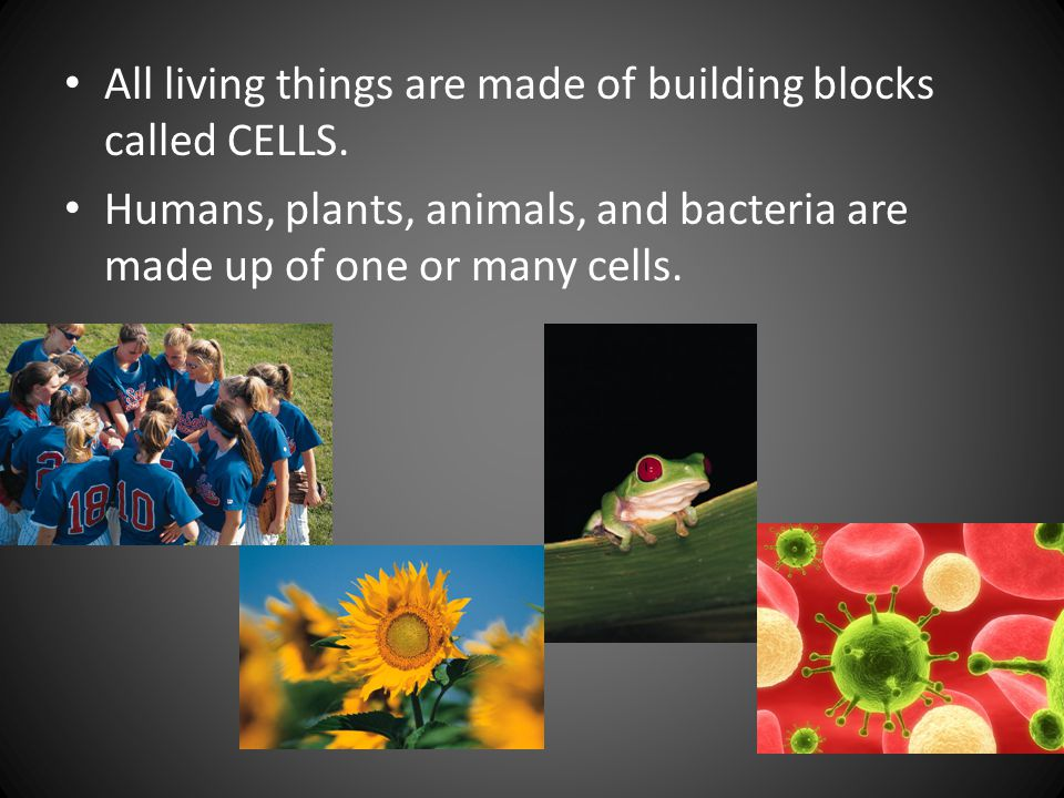 All living things are made of building blocks called CELLS. Humans, plants, animals, and bacteria are made up of one or many cells.