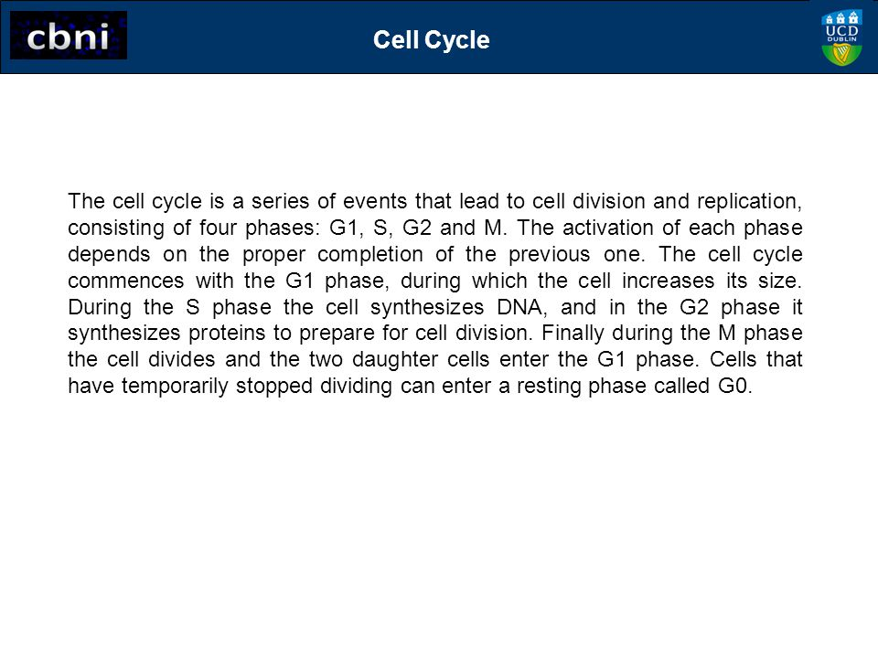 G0/G1 G1 phase: cell growth, protein synthesis Cell Cycle