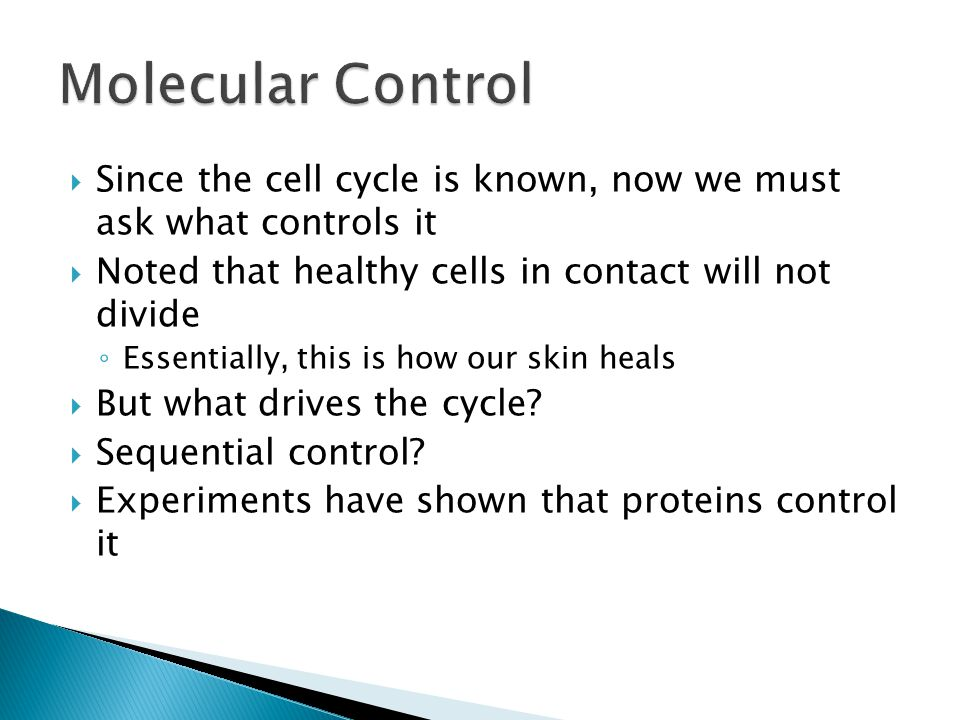  Since the cell cycle is known, now we must ask what controls it  Noted that healthy cells in contact will not divide ◦ Essentially, this is how our skin heals  But what drives the cycle.