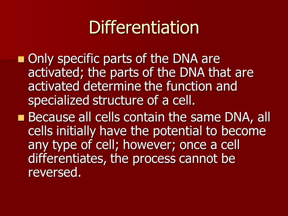 Differentiation Only specific parts of the DNA are activated; the parts of the DNA that are activated determine the function and specialized structure