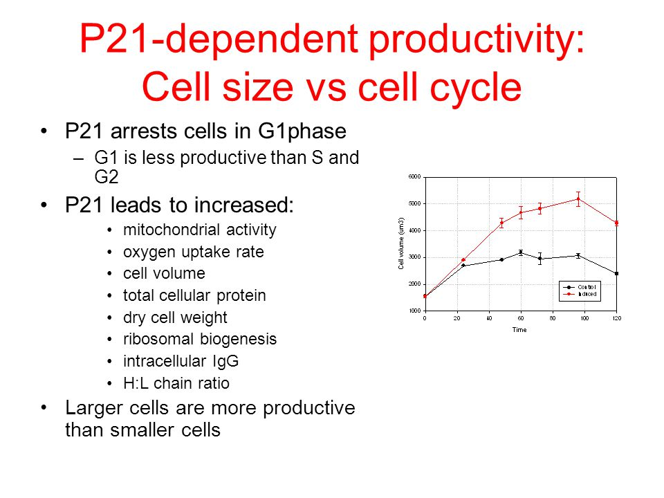 P21-dependent productivity: Cell size vs cell cycle P21 arrests cells in G1phase –G1 is less productive than S and G2 P21 leads to increased: mitochon