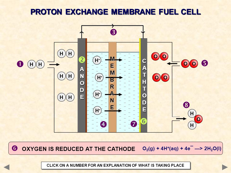 OXYGEN IS REDUCED AT THE CATHODE PROTON EXCHANGE MEMBRANE FUEL CELL        ANODEANODEANODEANODE CATHTODECATHTODECATHTODECATHTODE MEMBRANEMEMB