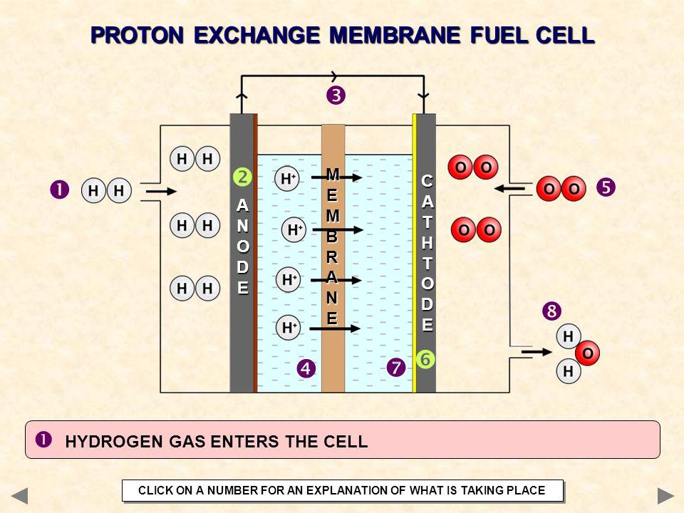 PROTON EXCHANGE MEMBRANE FUEL CELL        ANODEANODEANODEANODE CATHTODECATHTODECATHTODECATHTODE MEMBRANEMEMBRANEMEMBRANEMEMBRANE  HYDROGEN GAS