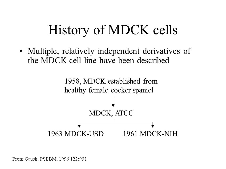 History of MDCK cells Multiple, relatively independent derivatives of the MDCK cell line have been described From Gaush, PSEBM, 1996 122:931 1958, MDC