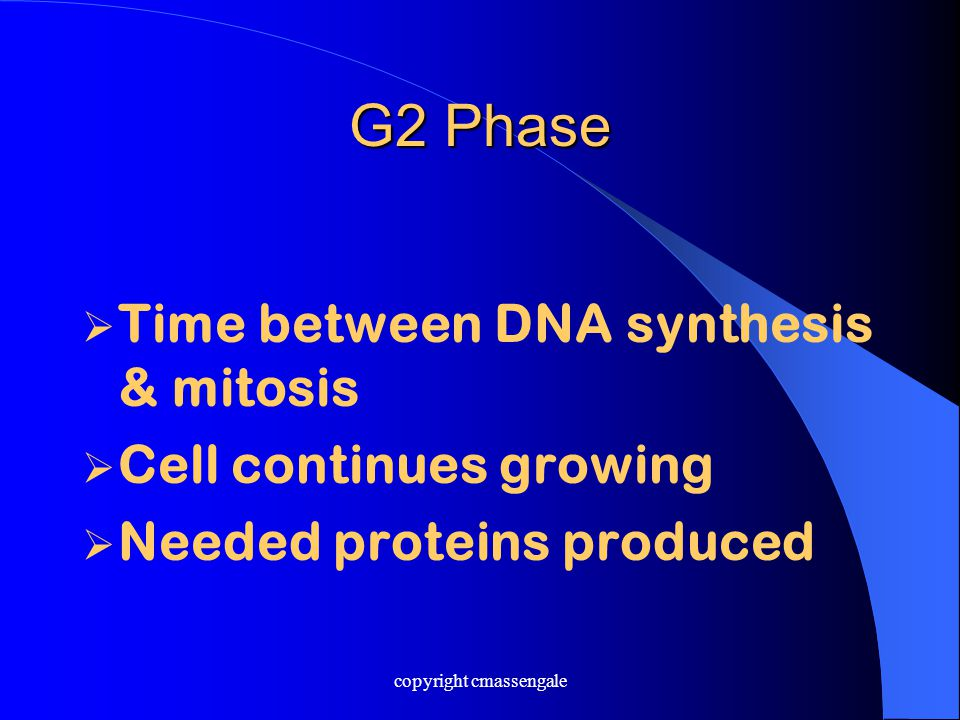 G2 Phase  Time between DNA synthesis & mitosis  Cell continues growing  Needed proteins produced copyright cmassengale