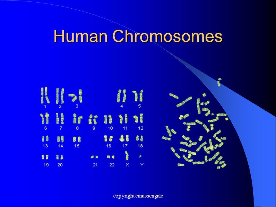 Human Chromosomes copyright cmassengale