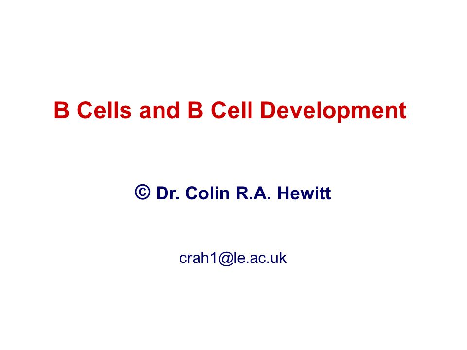 B Cells and B Cell Development © Dr. Colin R.A. Hewitt crah1@le.ac.uk