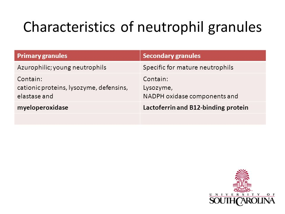 Characteristics of neutrophil granules Primary granulesSecondary granules Azurophilic; young neutrophilsSpecific for mature neutrophils Contain: cationic proteins, lysozyme, defensins, elastase and Contain: Lysozyme, NADPH oxidase components and myeloperoxidaseLactoferrin and B12-binding protein