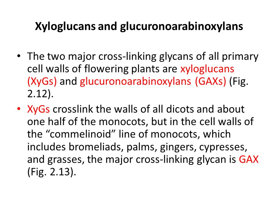 Xyloglucans and glucuronoarabinoxylans The two major cross-linking glycans of all primary cell walls of flowering plants are xyloglucans (XyGs) and gl
