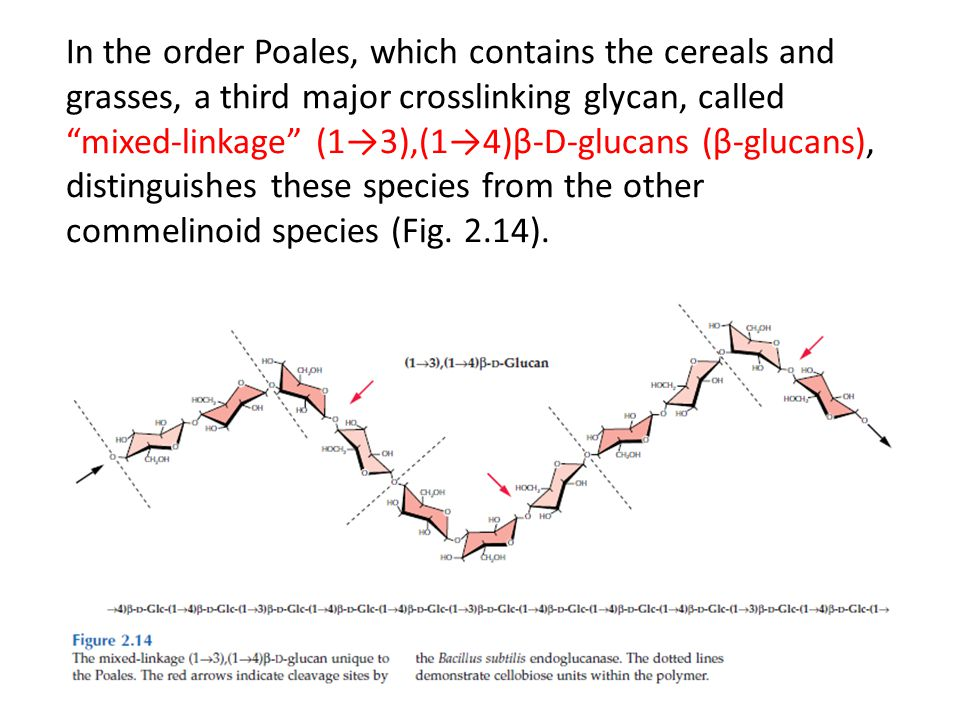 "In the order Poales, which contains the cereals and grasses, a third major crosslinking glycan, called ""mixed-linkage"" (1→3),(1→4)β-D-glucans (β-gluca"