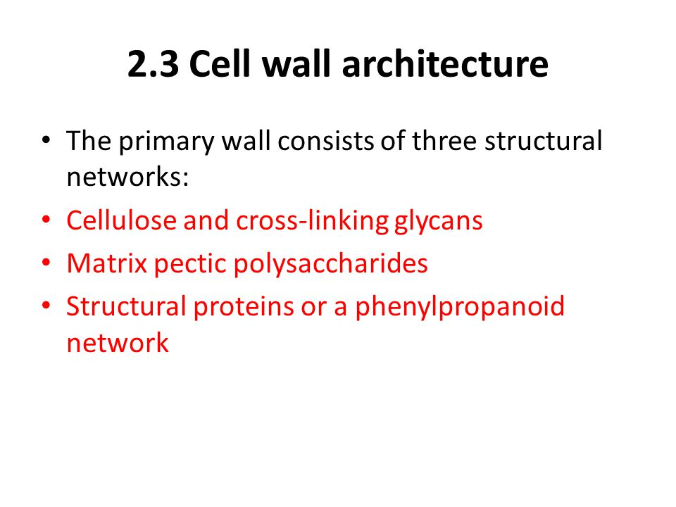 2.3 Cell wall architecture The primary wall consists of three structural networks: Cellulose and cross-linking glycans Matrix pectic polysaccharides S