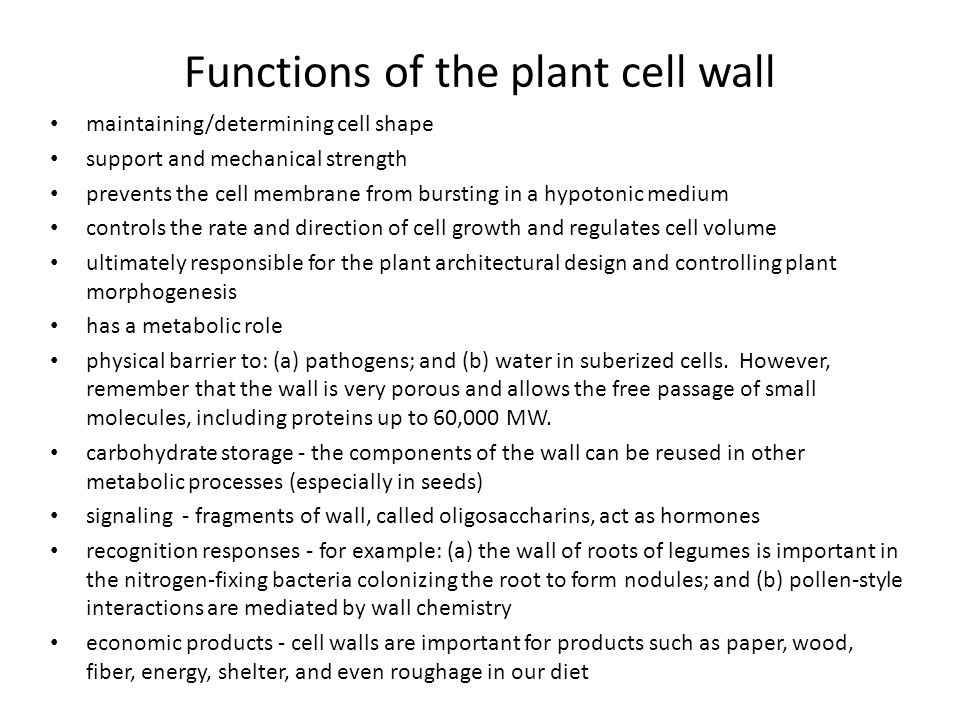 Functions of the plant cell wall maintaining/determining cell shape support and mechanical strength prevents the cell membrane from bursting in a hypo