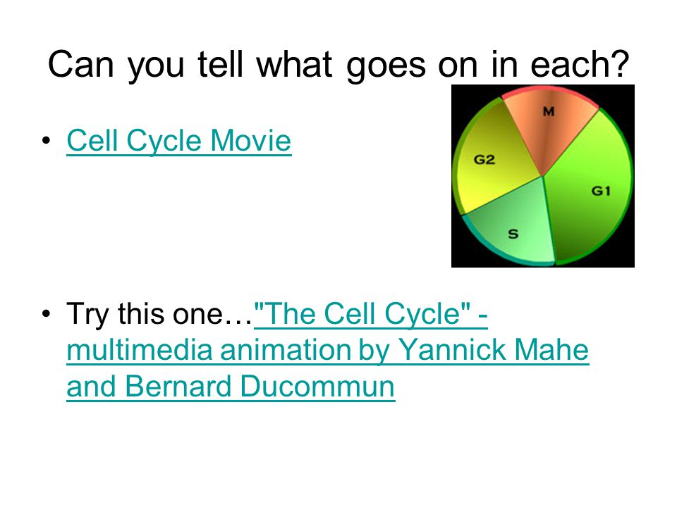 Can you tell what goes on in each? Cell Cycle Movie Try this one…