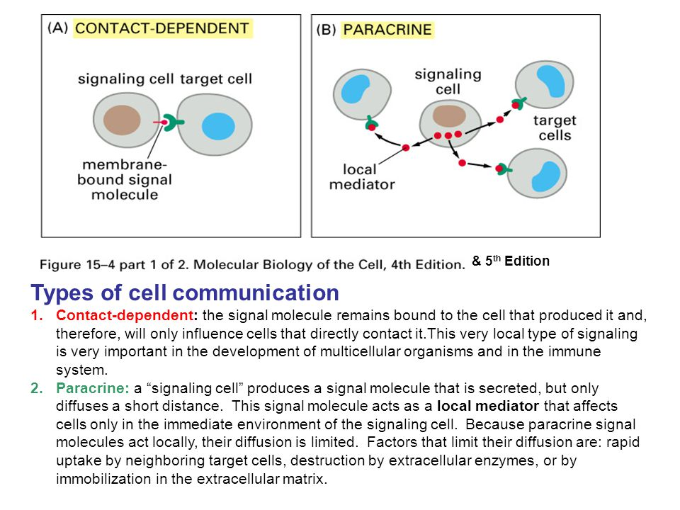 Types of cell communication 1.Contact-dependent: the signal molecule remains bound to the cell that produced it and, therefore, will only influence ce