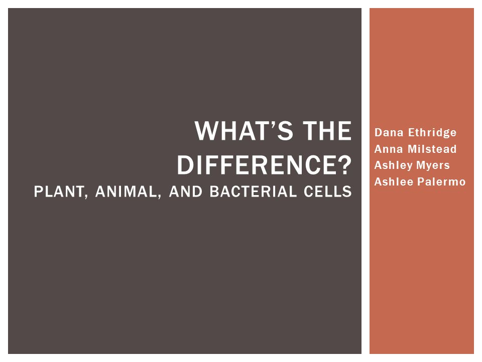 Dana Ethridge Anna Milstead Ashley Myers Ashlee Palermo WHAT'S THE DIFFERENCE.