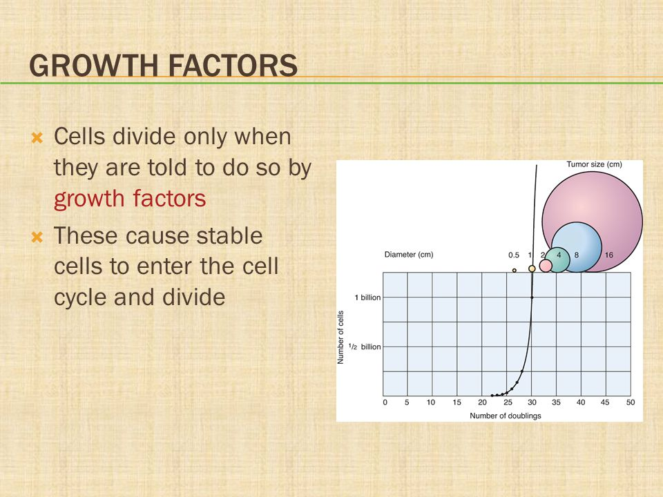 GROWTH FACTORS  Cells divide only when they are told to do so by growth factors  These cause stable cells to enter the cell cycle and divide