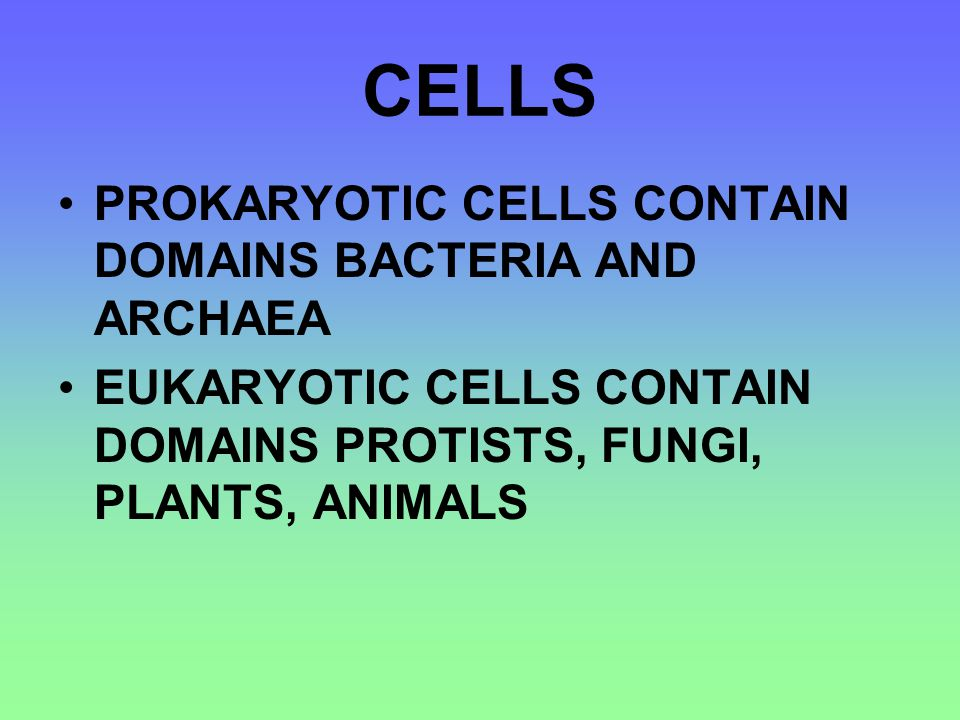 PROKARYOTES CHROMOSOMES ARE GROUPS TOGETHER IN A REGION CALLED THE NUCLEOID NO MEMBRANE-BOUND ORGANELLES ARE FOUND IN THE CYTOSOL