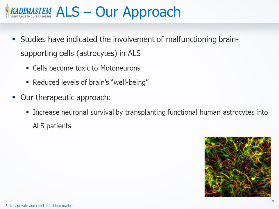Strictly private and confidential information  Studies have indicated the involvement of malfunctioning brain- supporting cells (astrocytes) in ALS  Cells become toxic to Motoneurons  Reduced levels of brain's well-being  Our therapeutic approach:  Increase neuronal survival by transplanting functional human astrocytes into ALS patients ALS – Our Approach 19
