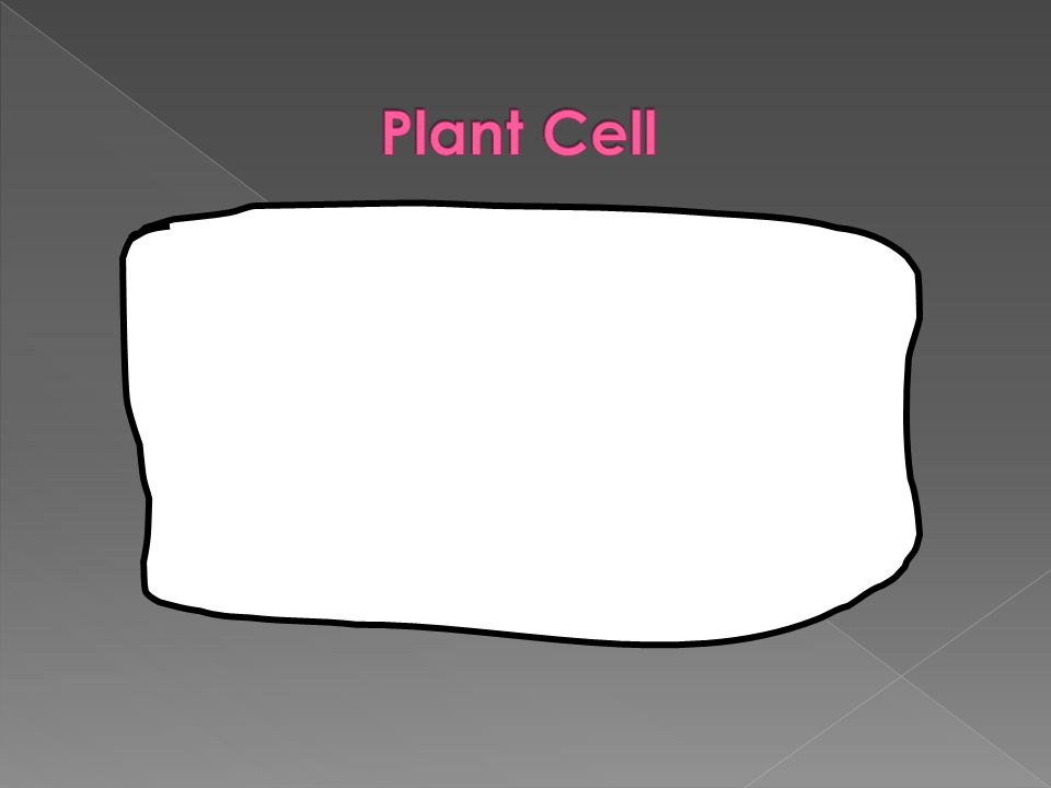 RIBOSOMES  Make proteins for the cell to use  Float freely or are attached to the endoplasmic reticulum (ER)  Ribosomes are made in the nucleus