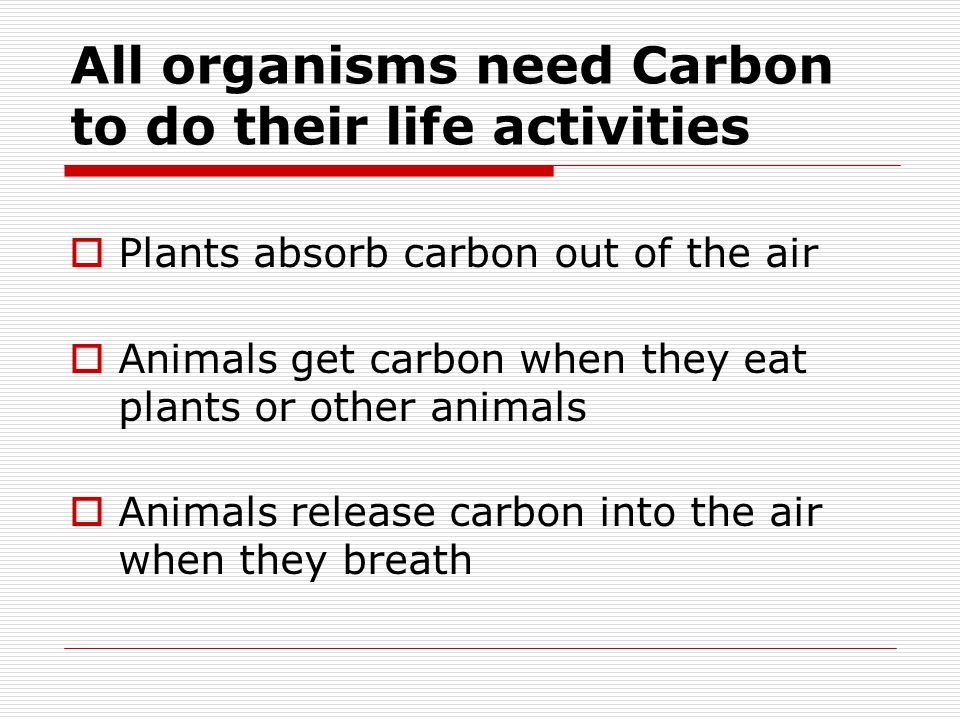 All organisms need Carbon, but how do they get it?