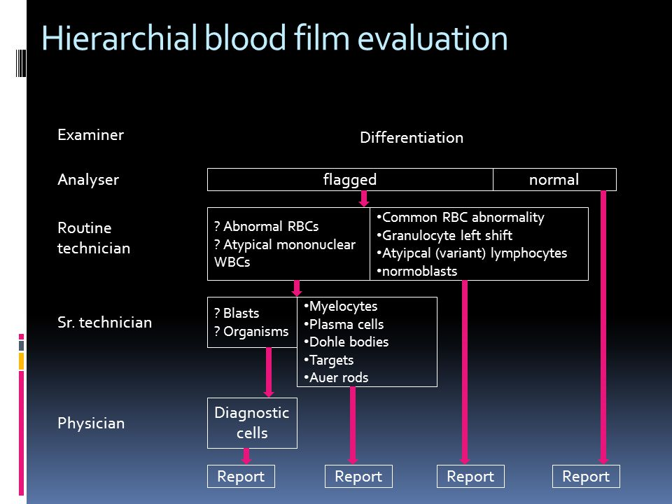 flaggednormal Analyser Routine technician ? Abnormal RBCs ? Atypical mononuclear WBCs Common RBC abnormality Granulocyte left shift Atyipcal (variant)