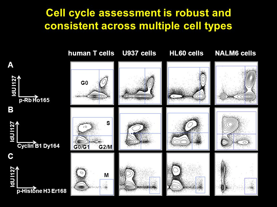 B A C Cyclin B1 Dy164 IdU I127 p-Rb Ho165 IdU I127 p-Histone H3 Er168 IdU I127 human T cells G0 M S G2/M G0/G1 U937 cellsHL60 cellsNALM6 cells Cell cycle assessment is robust and consistent across multiple cell types